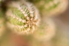 Piccola fine del cactus su immagini stock