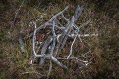 Piccola fine di legno su in foresta fotografia stock libera da diritti