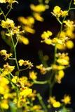 Piccola fioritura dell'orchidea Fotografia Stock