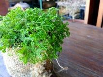 Piccola flora Immagini Stock