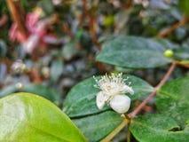 Piccola flora bianca Immagine Stock