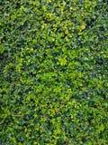 Piccola foglia verde nel fondo del giardino Fotografie Stock