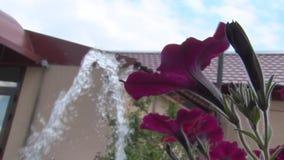Piccola fontana e un bello fiore nella parte anteriore video d archivio