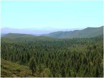 Piccola foresta Immagine Stock