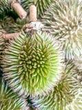 Piccola foresta dei durians Fotografia Stock Libera da Diritti