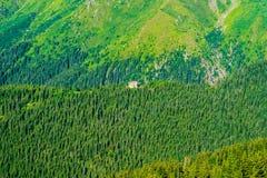Piccola foresta del beyound del cottage degli alberi sempreverdi fotografia stock