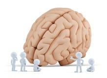 Piccola gente intorno al cervello gigante Isolato Contiene il percorso di ritaglio Fotografia Stock Libera da Diritti