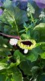 Piccola gerbera con la farfalla Immagine Stock Libera da Diritti
