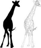 piccola giraffa Fotografia Stock Libera da Diritti