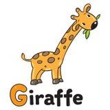 Piccola giraffa divertente, per ABC Alfabeto G Fotografia Stock