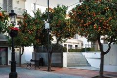Piccola iarda con gli alberi di agrume arancio a Marbella, Andalusia, Spagna fotografia stock