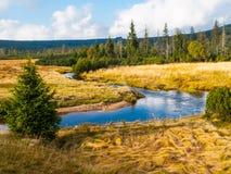 Piccola insenatura della montagna che serpeggia in mezzo ai prati ed alla foresta immagini stock libere da diritti