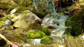 Piccola insenatura in foresta stock footage