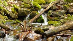 Piccola insenatura in foresta video d archivio