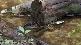Piccola insenatura nella foresta video d archivio