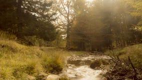 Piccola insenatura nella foresta di autunno stock footage