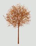 Piccola latifoglia in autunno Fotografia Stock