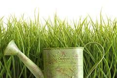 Piccola latta di innaffiatura con erba alta contro bianco fotografia stock
