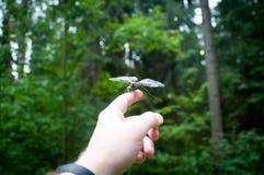 Piccola libellula a disposizione fotografie stock