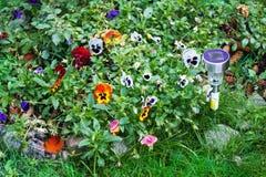 Piccola luce solare del giardino con i fiori della pansé Immagine Stock Libera da Diritti
