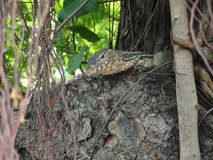 Piccola lucertola asiatica su un albero in mezzo a Bangkok immagini stock libere da diritti