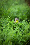 Piccola lucertola nel giardino fotografie stock