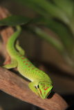 Piccola lucertola verde che raffredda fuori Immagine Stock