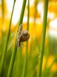 Piccola lumaca che striscia sul gambo di un giglio Giorno di estate caldo nel giardino Fotografia Stock Libera da Diritti