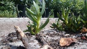 Piccola mini giungla succulente luminosa Immagine Stock