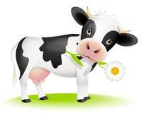 Piccola mucca che mangia margherita Fotografia Stock Libera da Diritti