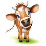 Piccola mucca della Jersey Immagini Stock