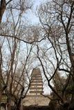 Piccola pagoda selvaggia dell'oca di Xian Cina Fotografie Stock