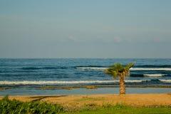 Piccola palma vicino al mare Fotografie Stock Libere da Diritti
