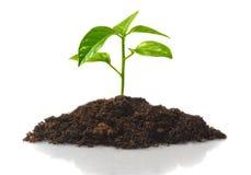 Piccola pianta Immagini Stock