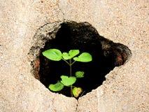 Piccola pianta Fotografia Stock Libera da Diritti