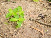Piccola pianta Fotografie Stock Libere da Diritti