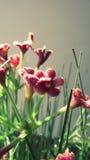 Piccola pianta artificiale rosa fotografia stock libera da diritti