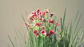 Piccola pianta artificiale rosa immagine stock libera da diritti