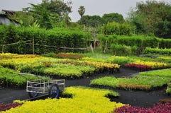 Piccola pianta in azienda agricola Fotografia Stock