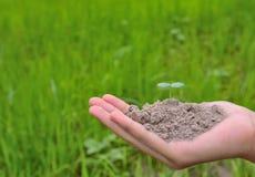 Piccola pianta che halding in natura sui concetti verdi del fondo immagini stock libere da diritti