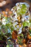 Piccola pianta coperta in ghiaccio Fotografia Stock