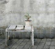 Piccola pianta d'annata delle bacche rosse Fotografia Stock