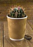 Piccola pianta del cactus in una tazza di caffè di carta Immagine Stock Libera da Diritti