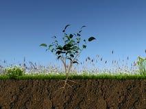 Piccola pianta nella sezione del terreno Immagine Stock Libera da Diritti
