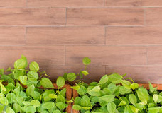 Piccola pianta sul vaso ceramico su terra per background1 Immagine Stock