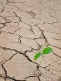 piccola pianta in terra incrinata Fotografie Stock