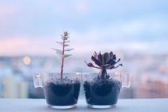Piccola pianta in vaso di vetro con stile morbido dell'annata del fuoco selettivo del fondo Fotografia Stock Libera da Diritti
