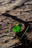 Piccola pianta verde Fotografia Stock Libera da Diritti