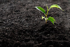 Piccola pianta verde Immagini Stock Libere da Diritti