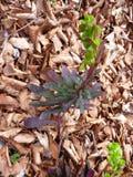 Piccola pianta verde che cresce dalla terra della foresta Immagini Stock Libere da Diritti